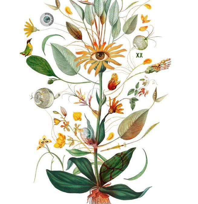 Herbarium Vagans – Wanderzeichnungen zwischen Botanik und Kunst